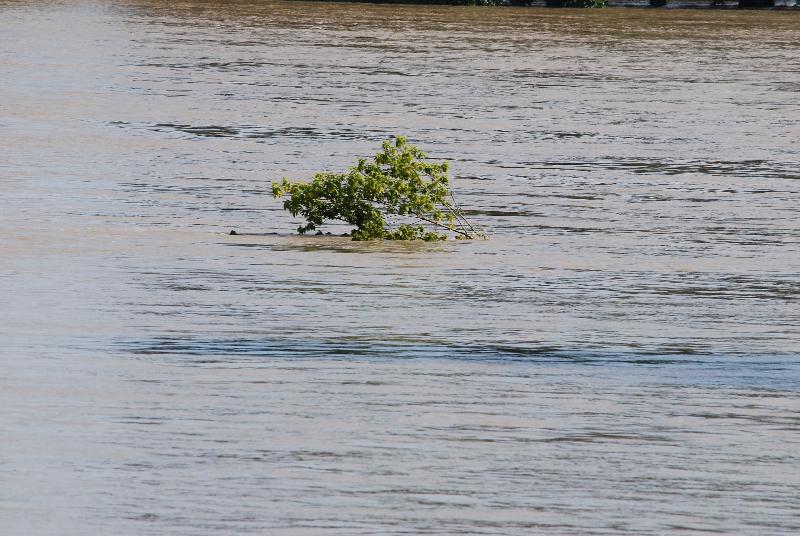 DSC_7261hochwasser